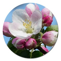 Apple Blossom  Magnet 5  (round) by ADIStyle