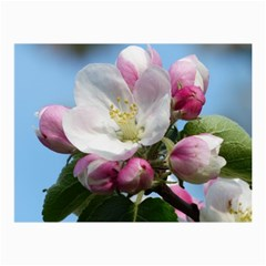 Apple Blossom  Canvas 20  X 30  (unframed) by ADIStyle