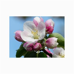 Apple Blossom  Canvas 24  X 36  (unframed)