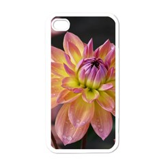 Dahlia Garden  Apple Iphone 4 Case (white) by ADIStyle