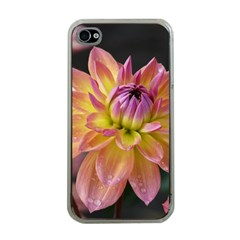Dahlia Garden  Apple Iphone 4 Case (clear) by ADIStyle