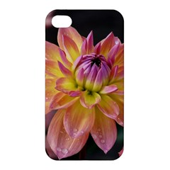 Dahlia Garden  Apple Iphone 4/4s Hardshell Case