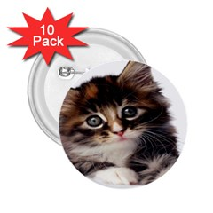 Curious Kitty 2 25  Button (10 Pack) by mysticalimages