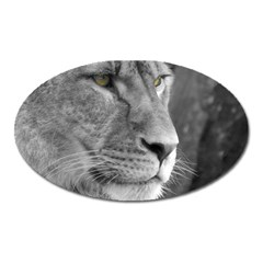Lion 1 Magnet (oval) by smokeart