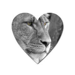 Lion 1 Magnet (heart) by smokeart
