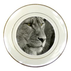 Lion 1 Porcelain Display Plate by smokeart