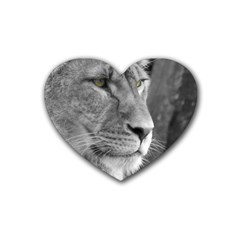 Lion 1 Drink Coasters 4 Pack (heart)  by smokeart