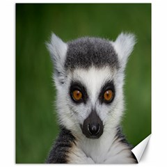 Ring Tailed Lemur Canvas 20  X 24  (unframed)