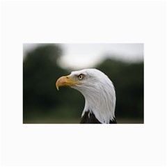Bald Eagle (1) Canvas 24  X 36  (unframed) by smokeart