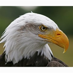 Bald Eagle (2) Canvas 20  X 20  (unframed) by smokeart