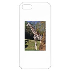 Giraffe Apple Iphone 5 Seamless Case (white)