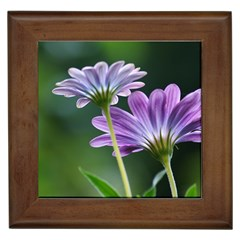 Flower Framed Ceramic Tile by Siebenhuehner