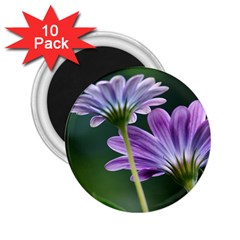 Flower 2 25  Button Magnet (10 Pack) by Siebenhuehner