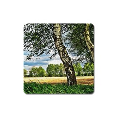 Trees Magnet (square) by Siebenhuehner