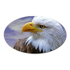 Bald Eagle Magnet (oval) by Siebenhuehner