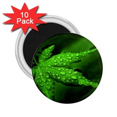 Leaf With Drops 2 25  Button Magnet (10 Pack) by Siebenhuehner