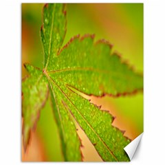 Leaf Canvas 12  X 16  (unframed) by Siebenhuehner