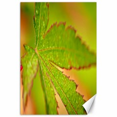 Leaf Canvas 20  X 30  (unframed)