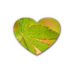 Leaf Drink Coasters (heart)