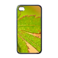 Leaf Apple Iphone 4 Case (black) by Siebenhuehner