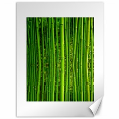 Bamboo Canvas 36  X 48  (unframed) by Siebenhuehner