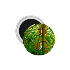 Bamboo 1 75  Button Magnet by Siebenhuehner