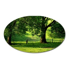 Trees Magnet (oval) by Siebenhuehner