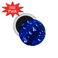 Waterdrops 1 75  Button Magnet (100 Pack) by Siebenhuehner