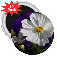 Cosmea   3  Button Magnet (10 Pack)