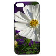 Cosmea   Apple Iphone 5 Hardshell Case With Stand by Siebenhuehner