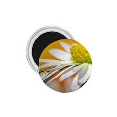 Daisy With Drops 1 75  Button Magnet by Siebenhuehner