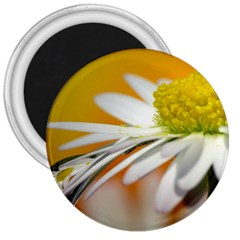 Daisy With Drops 3  Button Magnet by Siebenhuehner