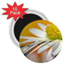 Daisy With Drops 2 25  Button Magnet (10 Pack)