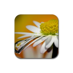 Daisy With Drops Drink Coasters 4 Pack (square) by Siebenhuehner