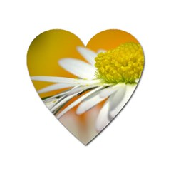 Daisy With Drops Magnet (heart) by Siebenhuehner