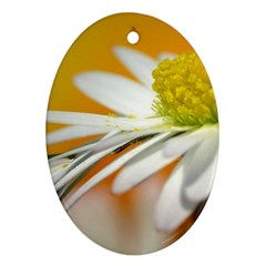 Daisy With Drops Oval Ornament (two Sides)