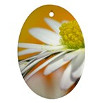 Daisy With Drops Oval Ornament (Two Sides) Front