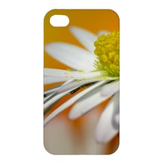 Daisy With Drops Apple Iphone 4/4s Premium Hardshell Case by Siebenhuehner