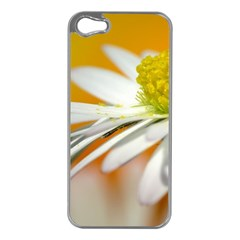 Daisy With Drops Apple Iphone 5 Case (silver) by Siebenhuehner