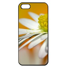 Daisy With Drops Apple Iphone 5 Seamless Case (black) by Siebenhuehner