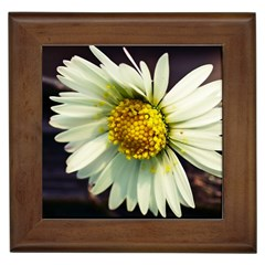 Daisy Framed Ceramic Tile by Siebenhuehner