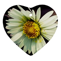 Daisy Heart Ornament by Siebenhuehner