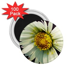 Daisy 2 25  Button Magnet (100 Pack) by Siebenhuehner
