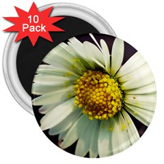 Daisy 3  Button Magnet (10 Pack) by Siebenhuehner