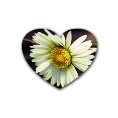Daisy Drink Coasters 4 Pack (heart)  by Siebenhuehner