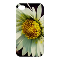 Daisy Apple Iphone 4/4s Hardshell Case by Siebenhuehner