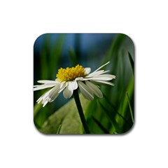Daisy Drink Coasters 4 Pack (square) by Siebenhuehner