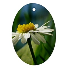 Daisy Oval Ornament (two Sides) by Siebenhuehner