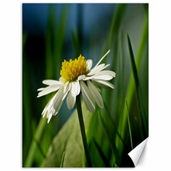 Daisy Canvas 18  X 24  (unframed) by Siebenhuehner