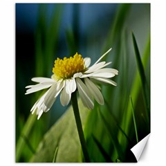 Daisy Canvas 20  X 24  (unframed) by Siebenhuehner